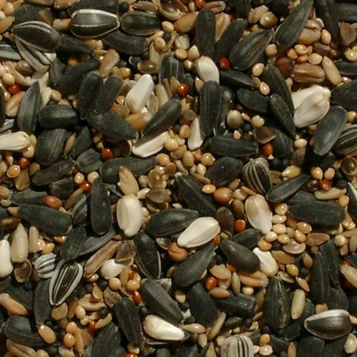 feeder-mix-a-fabulous-free-flowing-seed-mix-with-a-high-of-home-grown-black-sunflower-seeds-11-1