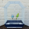 NEW PAIR OF BUDGIE + BRAND NEW CAGE - 1